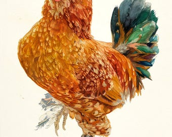 The Curious Brahma Rooster. Brahma Rooster Print.