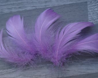 Set of 50 purple goose feathers