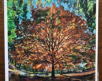 Sugar Maple Tree Illuminated during Autumn in Prospect Park Brooklyn
