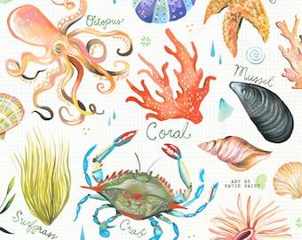 Explore a Tidepool | Ocean Chart | Watercolor Wall Art | Marine | Katie Daisy | 8x10 | 11x14