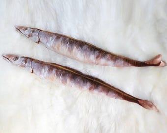 Sauryfish Dog / Cat Toy