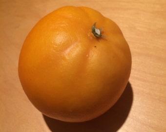 Disguised Orange Geocache