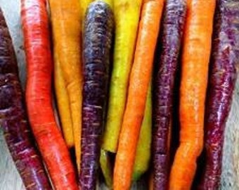 Carrot 'Rainbow' Mixed colours and varieties - 100 Seeds