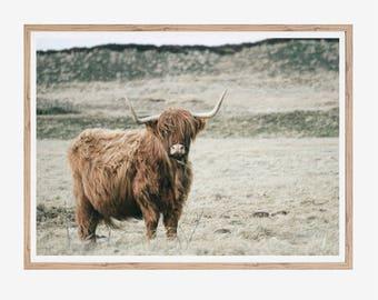 Highland Cow Print, Highland Cow Art, Highland Cow Photo, Highland Cow Poster, Animal Print, Scandinavian Art, Animal Poster, Cow Printable