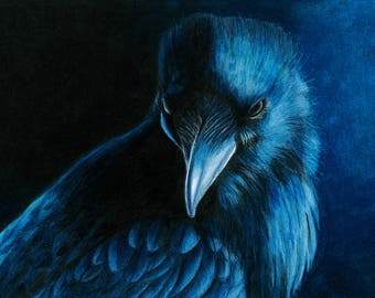 Raven -  Colour Pencil, A4 Print