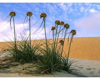 Sand dunes and flowers photography picture decoration