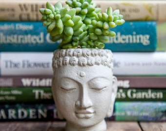 Buddha Head Planter - small cement pot - Buddha Head Planter #2