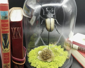 Bell/glass globe insect on base (cabinet of curiosities, vanities)