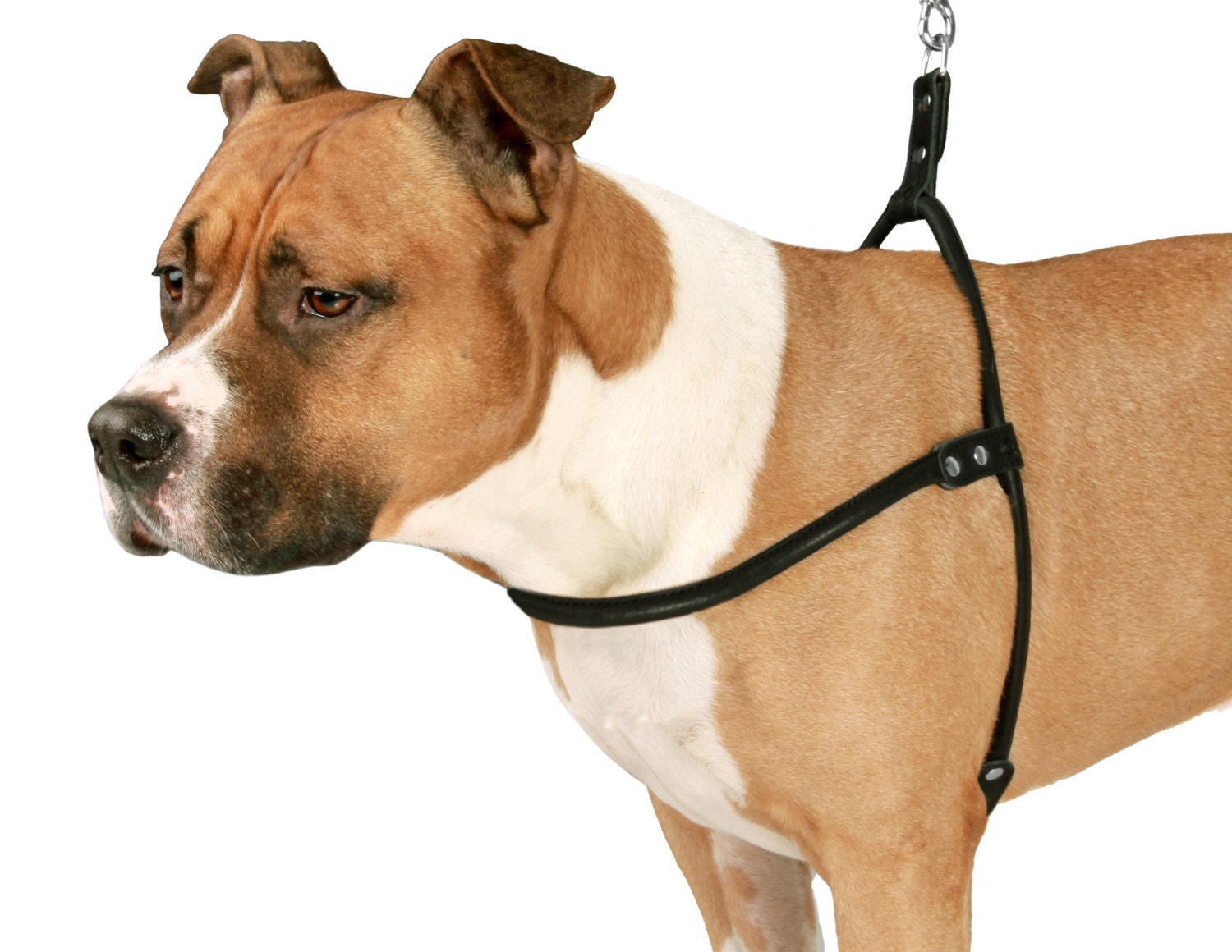 Rolled Leather Dog Harness Small Medium Large Black Brown