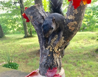 Vintage Black Squirrel Taxidermy 50% off!!!  From Old Wisconsin Resort