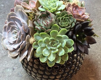 Succulent Arrangement in Gold Studded Vase