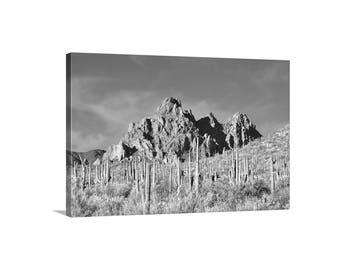 Desert Print, Sonoran Desert Art, Black and White, Cactus Print, Arizona Landscape, Wall Art, Picture Gift, Framed Canvas, Saguaro