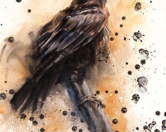 Branching Out, print of a Pine Raven sitting on a branch, black bird, crows, birds, North Amer. Wildlife, Pine Raven art