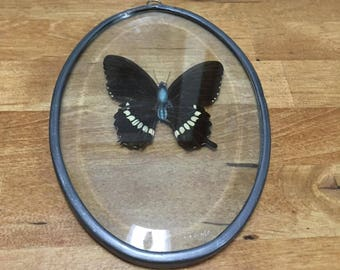 Pressed Butterfly Window Decor
