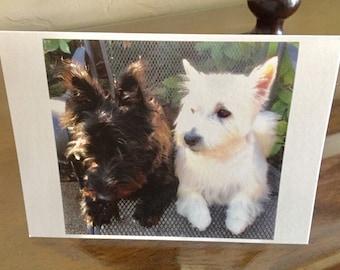 Scottie / Westie Card