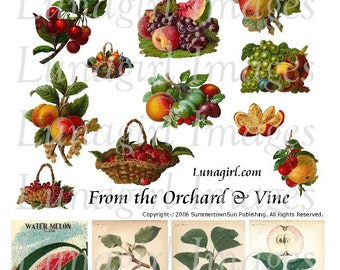 VINTAGE FRUIT, digital collage sheet, vintage images Victorian cards die-cuts, antique botanical prints, fruit basket, art ephemera DOWNLOAD