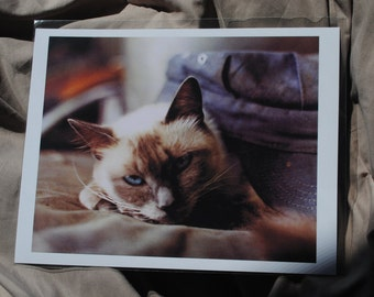 Quality Cat Photo Print