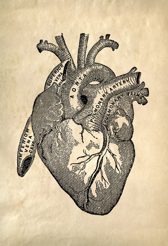 Heart Anatomy Vintage Reproduction Print Human Biology Chart