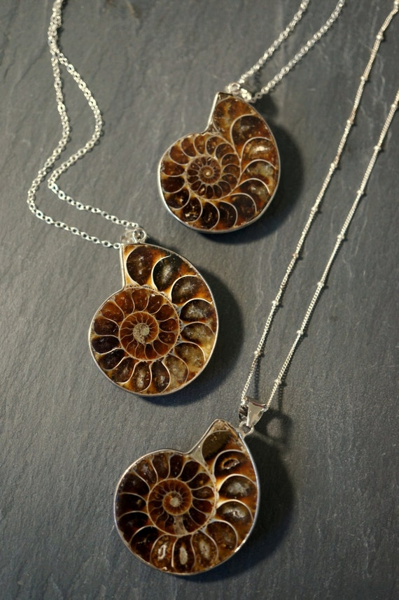 Ammonite fossil ammonite necklace silver ammonite necklace aloadofball Image collections