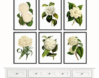 Botanical Print Set of 6 - Large Prints - Botanical Print - Farmhouse Print - Print - Antique Botanical Prints - White Flowers - Wall Art