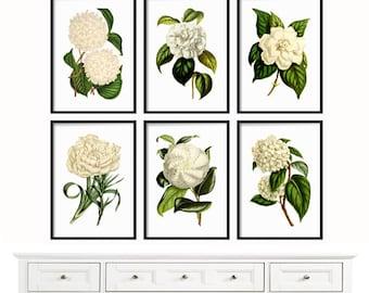 Botanical Print Set of 6 - Large Prints - Botanical Print - Farmhouse Print - Print - Antique Botanical Prints - White Flowers - Wall Art