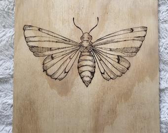 Moth wood burning
