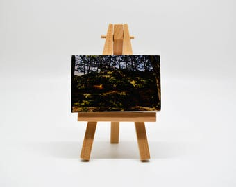 On the Rocks - Mini Canvas w/ Easel
