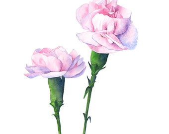 Carnation print of watercolour painting, C12016, A4 size print, carnation watercolor painting, pink carnation painting, botanical wall art