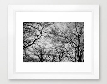 Made In Central Park Photography Print