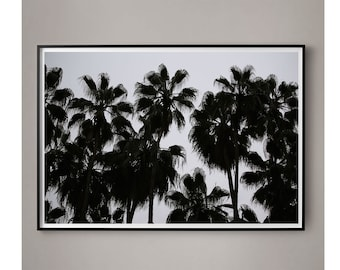 Minimal Palm Tree Photography Large Black and White Minimal photography Tropical Art Large Photo Loft Art Black Palm Trees Sky Photography
