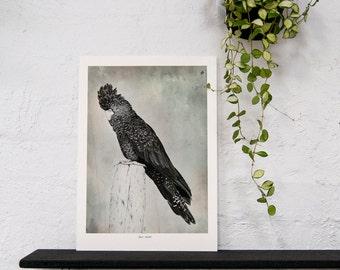 Black Cockatoo - A3 Giclee print