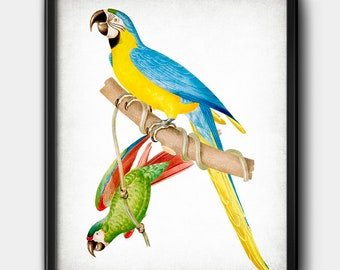 Parrots · Instant Download · Birds · Exotic · Vintage · Printable · Digital File #213