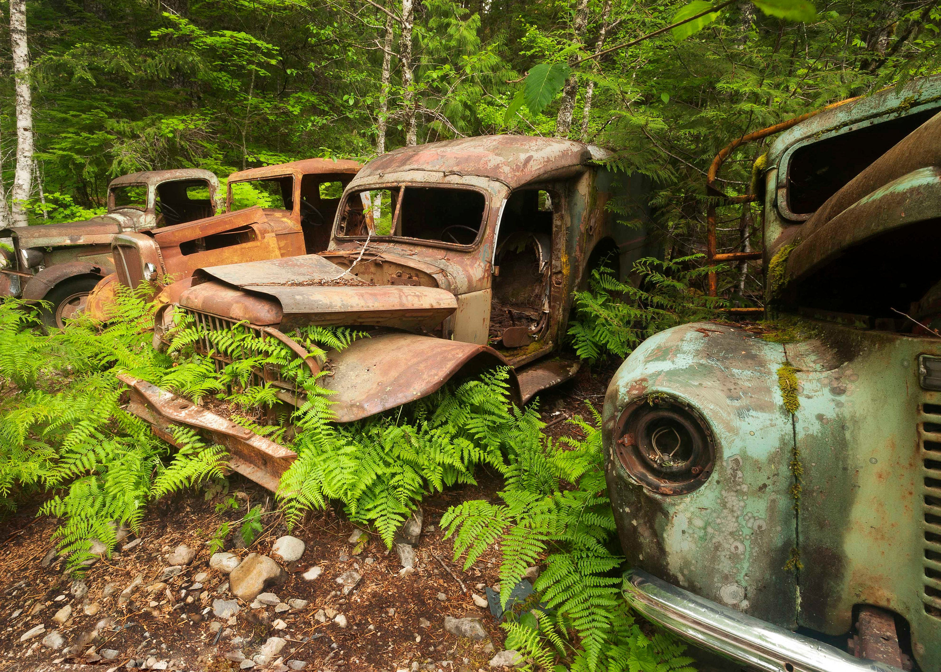 Old rusty trucks Opal creek Old truck decor Vintage trucks