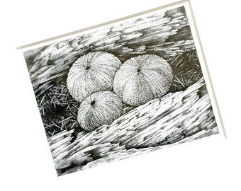 Sea Urchin Drawing, Framed Stipple Ink Drawing, Framed Original Art, Sea Urchin Original Art, Framed Urchin Black and White Ink Drawing