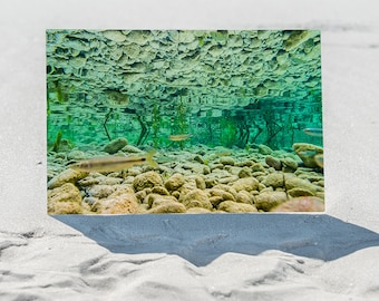 Infinite Green Freshwater Serenity, Original Underwater Photography, Ocean Art Print on Aluminum, Metal Wall Art