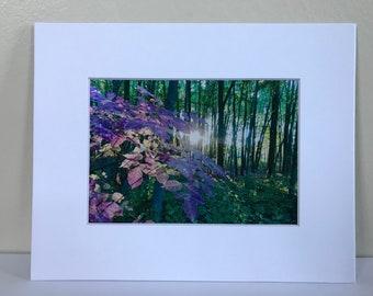 Sun rays through leaves 5x7 print