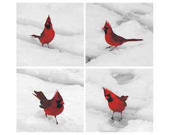 Cardinal Photographs Set - Red Male Cardinal - Winter Bird Art - Nature Art - Wall Decor - Snow And Bird - NY Cardinal - Bird Photograph