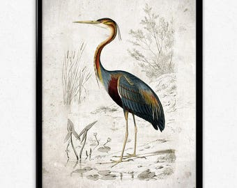Purple Heron Bird Vintage Print - Bird Poster - Bird Art - Bird Picture - Bird - Wildlife Art - Home Decor - Wall Art - Orbigny (VP1035)