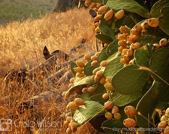 AUTUMN  Landscape wall art Photography Prickly Pears scenic Green Gold Seasons Gift rusty barrels red orange fruit, sunlight house deco