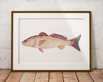 PRINT of Watercolor Redfish Painting