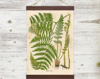 Vintage Botanical Ferns Illustration w/ poster hanger - magnetic self assembly - EZA152