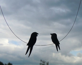 Curious swallows
