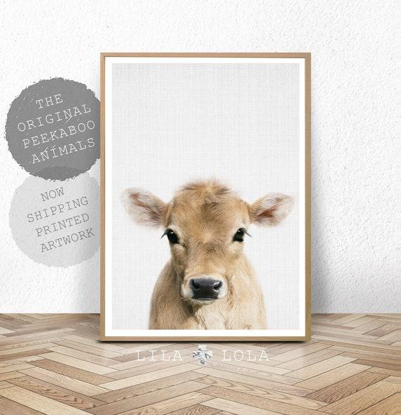 Cow Print, Farm Baby Animal, Calf, Farmhouse Nursery Wall Art Decor, Shipped and Posted Poster, Baby Bedroom, Kids Bedroom Decor