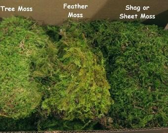 Dry Moss Sample, Beautiful Green Moss.