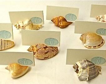 20 Seashell Card Holders - Beach Weddings Showers Dinners sea shells place cards, dessert table cards nautical