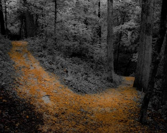 Stylized Woodland Forked Path Square Photograph on Canvas