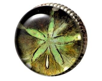 Set of 2 - Retro-Whitewashed Metal Knobs – Green Starfish Artwork under Glass