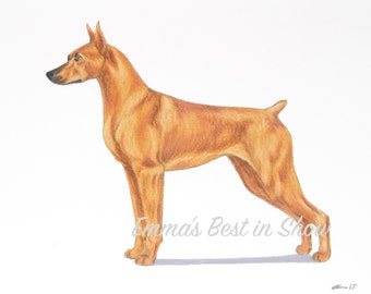 German Pinscher Dog - Archival Fine Art Print - AKC Best in Show Champion - Breed Standard - Working Group - Original Art Print