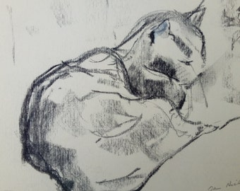 Charcoal drawing of a tabby cat