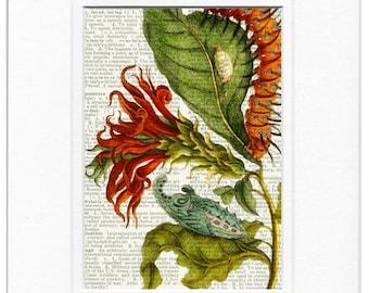 1600's botanical V print